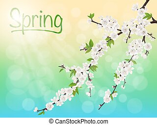 Spring blooming cherry branch with