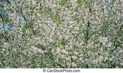 Spring Blooming Tree