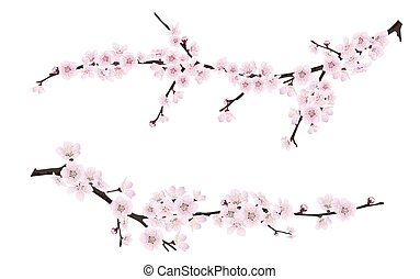 spring blooming tree branches with pink flowers