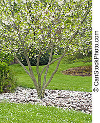 Spring Blooms - A Spring view of the arboretum in Holmdel...