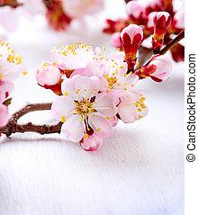 Spring Blossom. Apricot Flowers