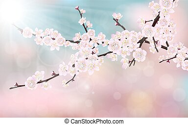blossom cherry tree branch