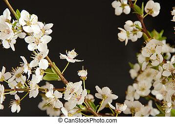 Spring blossom frame