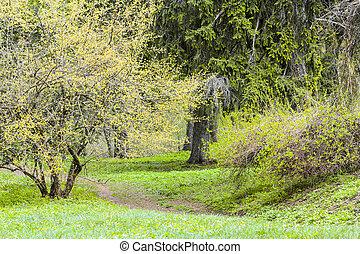 Spring blossom landscape