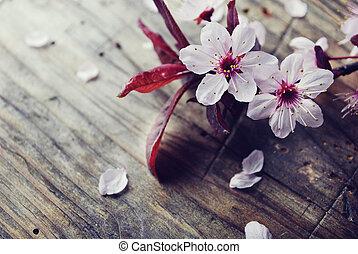 Spring Blossom - Spring blossom on rustic wooden plank