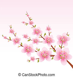 Spring illustration of a branch with blossom on the rose background