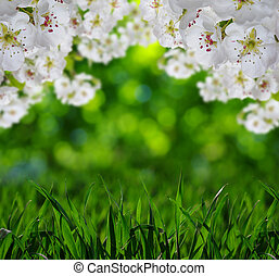 Spring blossom with soft blur background