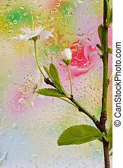 Spring blossoming tree brunch