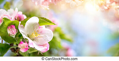 Spring blossoms background in beautiful colors