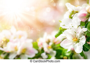 Spring blossoms background in pleasing tender colors