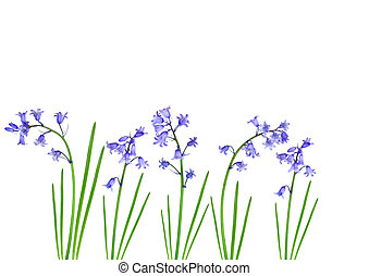 Abstract design of bluebells set against a white background.