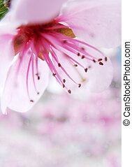 Spring border background with beautiful blossom
