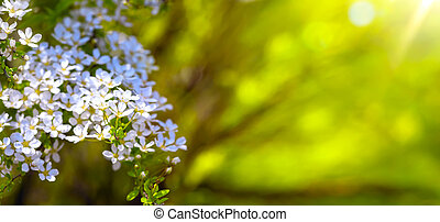 Spring border background with blossom