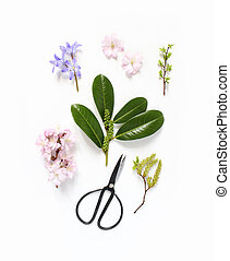 Spring botanical floral composition. Pink Japanese cherry blossoms, blue scilla flowers and evergreen English laurel branch with black vintage scissors on white wooden background. Styled stock photo. Flat lay, top view.