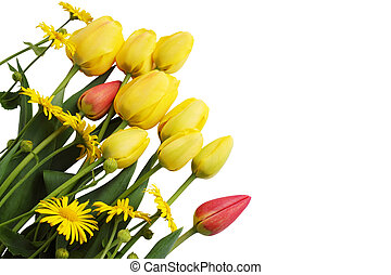 yellow tulips and daisies