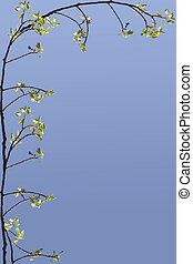 a frame of a branch and spring leaves