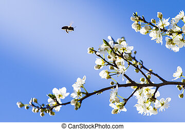 Spring Branch in Blossom with Bee
