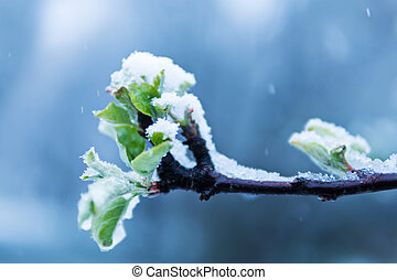 Spring branch in the snow