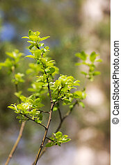 Spring branch with green leaves