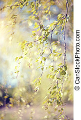 Spring branches of a birch lit with the sun.