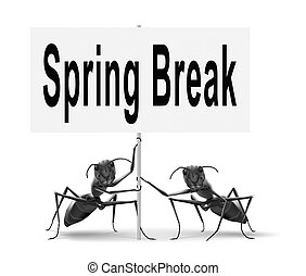 spring break vacation or holiday