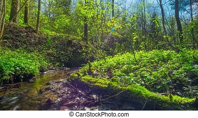 Spring Brook, time-lapse with crane