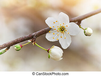 Spring bud flower. Composition of nature.