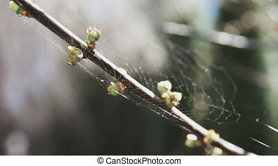 Spring buds on branch of tree - Extreme close up of buds on...