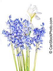 spring bunch flower