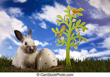 Spring bunny - Easter- the Sunday in March or April when...