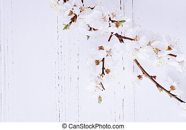 Spring cherry blossom on rustic wooden background. - Spring...