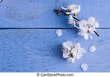 Spring cherry blossom on rustic wooden background. - White...