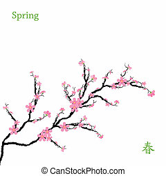 Spring Cherry Blossoms - Beautiful spring cherry blossom...