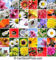 spring collage.