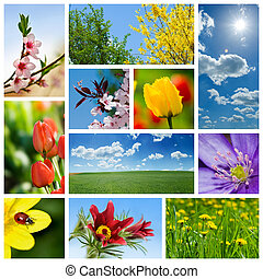 Spring collage representing various season-related flowers...