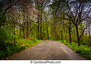 Spring color along a road through a forest in Lancaster...