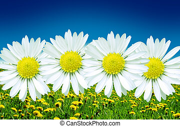 Colors of the beautiful spring with flowers and blue sky