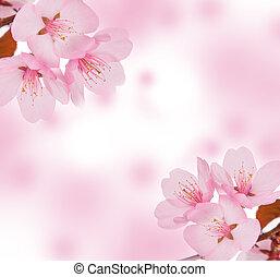 Spring concept. Pink blossom or background.