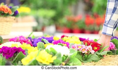 spring concept, woman florist takes care of flower plants