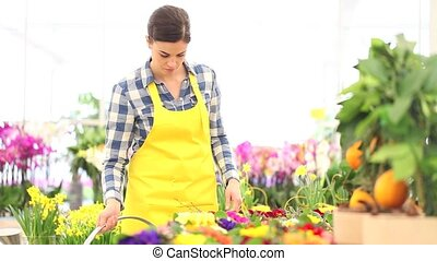 spring concept, woman florist takes care of flowers plants