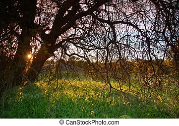spring countryside - the countryside of northern California ...