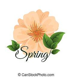 spring cute  flower