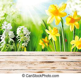 Spring daffodils and hyacinths