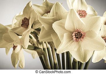 Spring Daffodils - Creamy Hues - A bunch of Spring Daffodils...