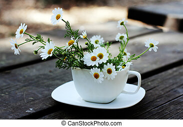Spring daisies on white cup
