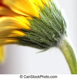 Spring daisiy