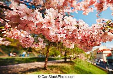 Spring day in the city park, Prague, Czech Republic