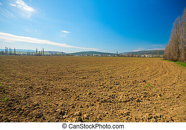 Wheat field in the background