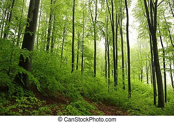 Spring deciduous forest in misty rainy weather