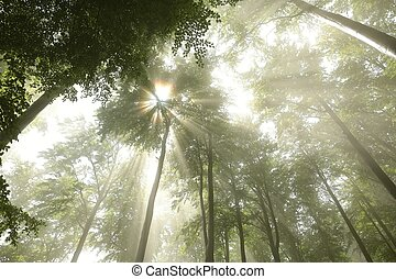 Spring deciduous forest